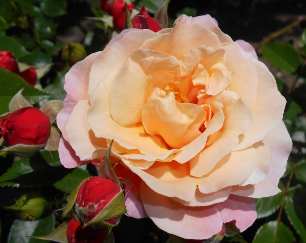 Rosa_Marie_Curie_2015-07-01_3914