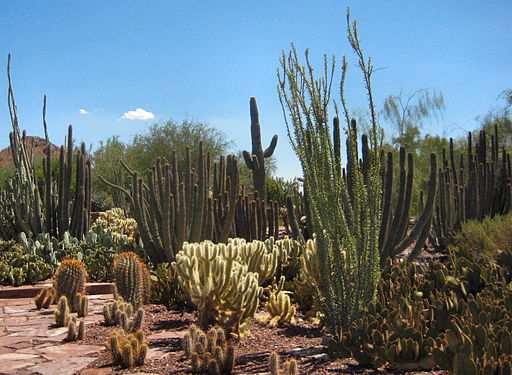 512px-Desert_Botanical_Gardens