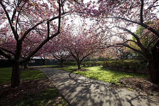 Brooklyn_Botanic_Garden