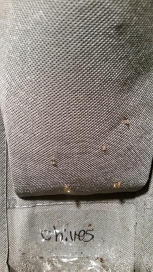 phoebe holes