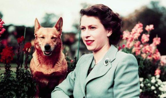 Queen-s-dogs-1144464